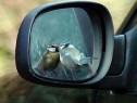 Эксперты выяснили, на какие машины птицы гадят чаще всего